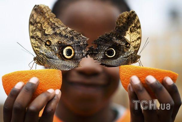 Тропіки серед Лондона. У столиці Британії вражаючі метелики заполонили музей