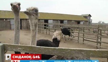Мой путеводитель. Николаевская область