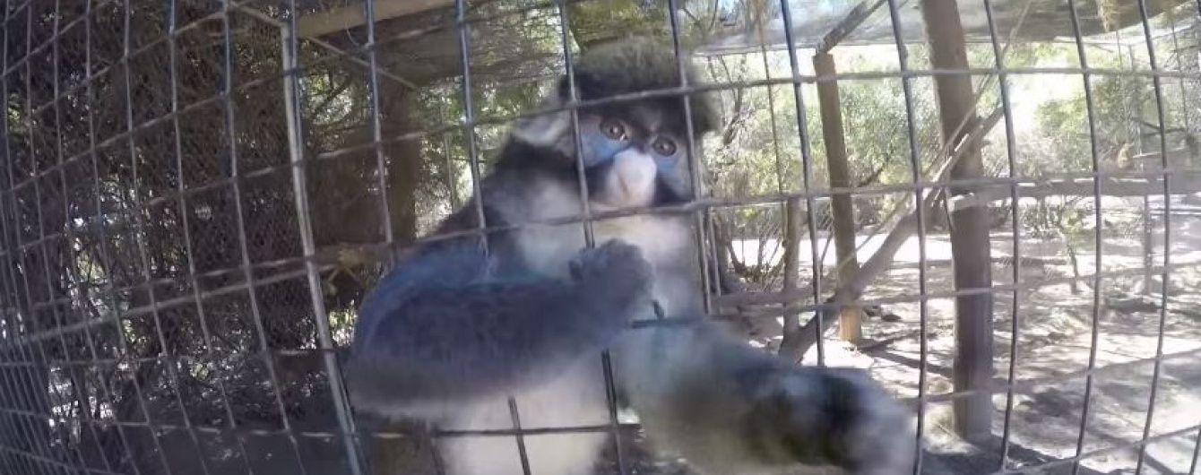 Допитлива мавпа поцупила GoPro у відвідувача зоопарка і почала знімати все довкола