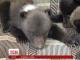Трійню маленьких ведмежат показали у Харківському зоопарку