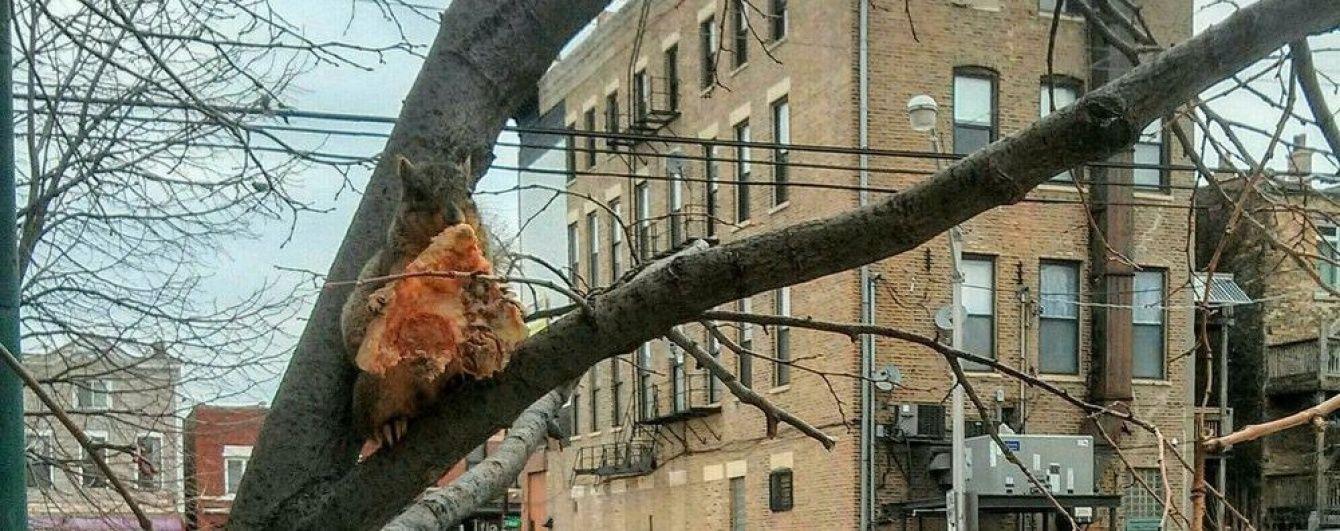 У Чикаго перехожих здивувала білка, яка поїдала на дереві піцу