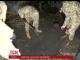 Що розкопали слідчі разом з тілом убитого Грабовського