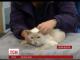 Вісім днів мандрувала поштою по Великій Британії кішка Капкейк