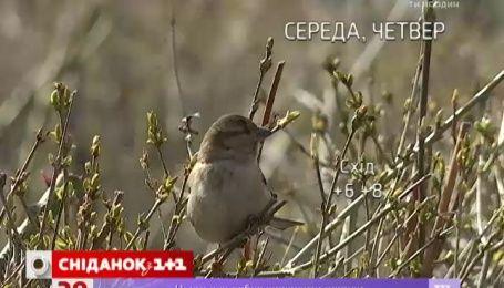 Цього тижня в Україні очікується по-справжньому весняна погода
