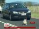 Коала спричинила транспортний хаос в австралійському місті Брісбен