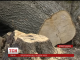 Гнізда колонії сірих чапель знищили на Кіровоградщині