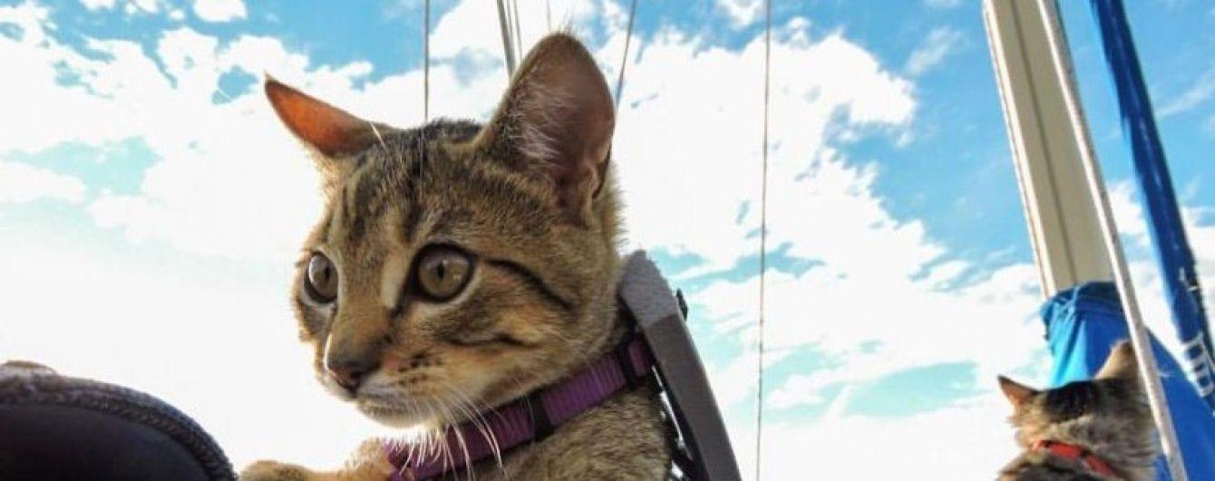 Коти-мандрівники підкорили  байдарки та завели акаунти в соцмережах