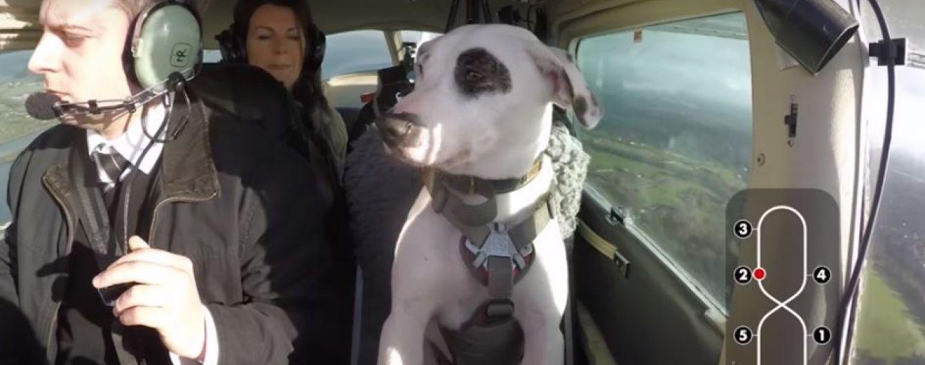 Собака-пілот. У Мережі з'явилося відео пса, що керує літаком