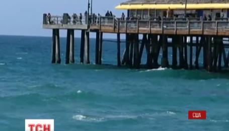 Неочікуваний гість на каліфорнійському пляжі