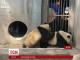 Унікальні шлюбні ігри панд зафільмували у китайському заповіднику