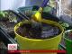 У центрі Києва облаштують город для охочих вирощувати овочі