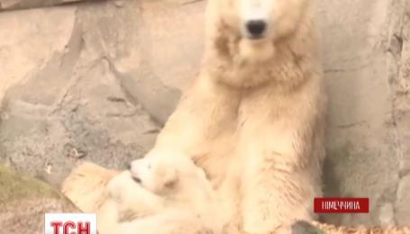 В немецком зоопарке к публике вышел полярный медвежонок по имени Лили
