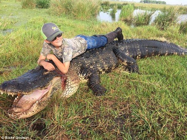 У США величезний алігатор, який убивав корів, здивував мисливців своїми розмірами