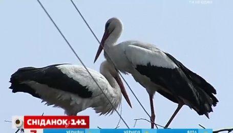 В Гидрометцентре уверяют, что в ближайшее время весна будет греть Украину