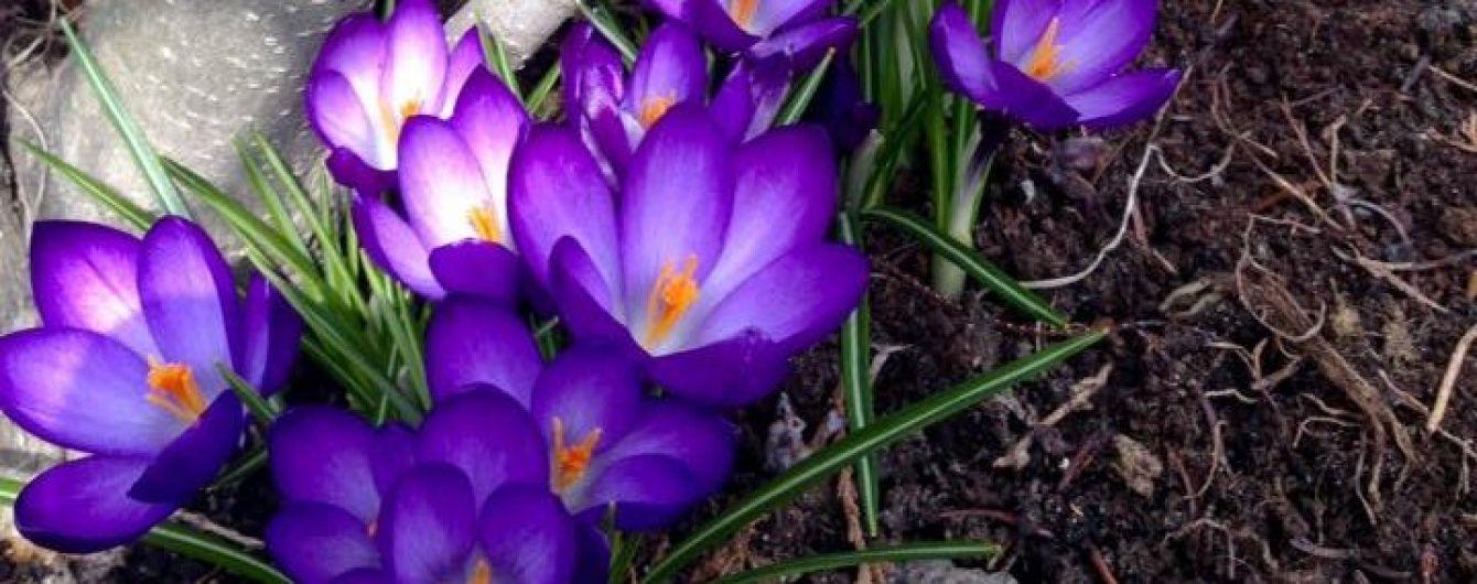 Якою буде погода в квітні. Прогнози від професійних та народних синоптиків