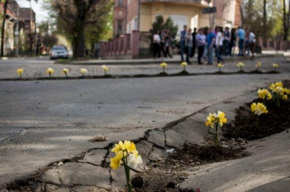 У Чернівцях висадили клумби в ямах на дорозі