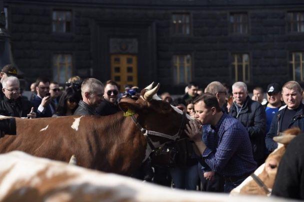 Ляшко з доярками та двома коровами пікетують Кабмін