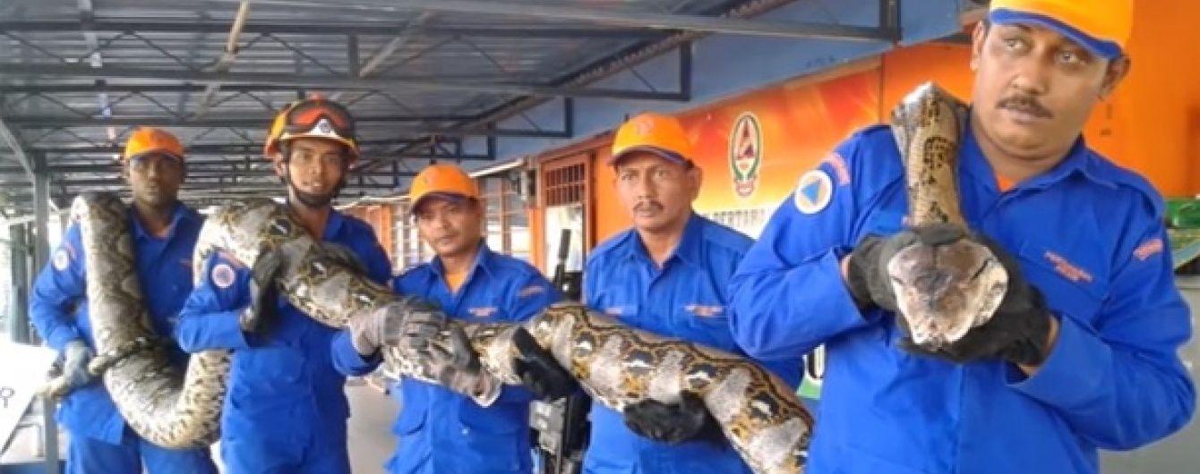 Померла найдовша змія у світі