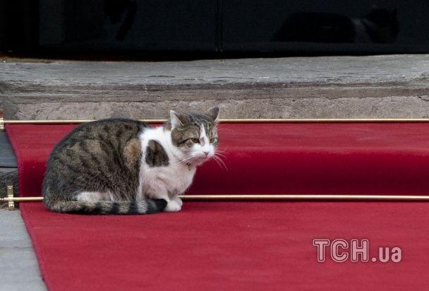 МЗС Британії найняло на роботу кота Пальмерстона