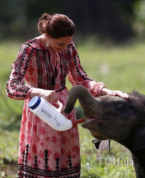 Монархи і слони. Як герцоги Кембриджські годували слоненят в Індії