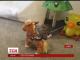 Мережею шириться відео, як сова катається верхи на іграшковій тварині