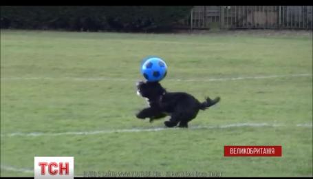 Британский пес Алфи покоряет интернет своими футбольным трюками