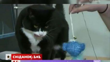 У міністерство закордонних справ Великої Британії на роботу взяли кота