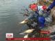 На Житомирщині вимирає риба