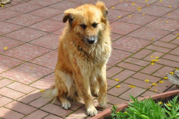 У Миколаєві невідомі підірвали гранату, постраждала собака