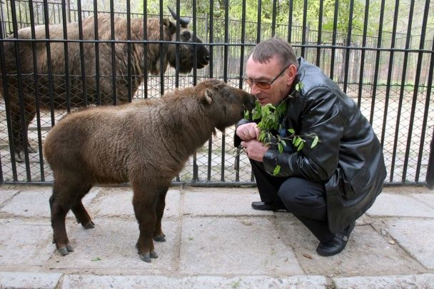 Унікальна тварина. У зоопарку Миколаєва показали першого українського газелебика
