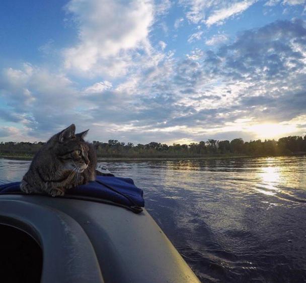 Коти-екстремали: американець створив Інстаграм для подорожуючих тварин