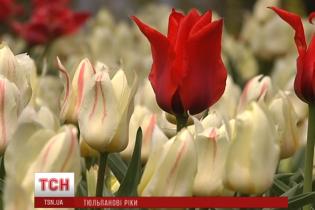 На Співочому полі киянам підготували видовищний тюльпановий сюрприз