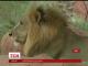 У зоопарку індійського міста Хайдерабад поливають тварин водою, рятуючи від спеки