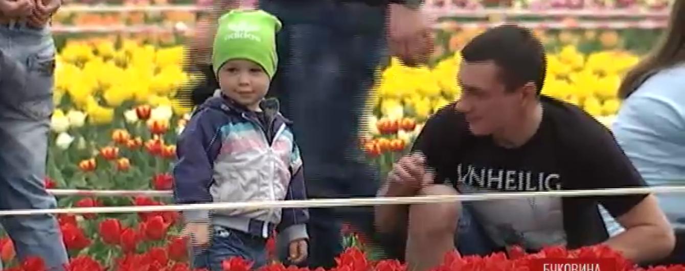 Гектари тюльпанів розквітають у Чернівцях і Києві