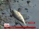 В Житомирі вимагають перевірити підприємства, викиди яких могли спричинити забруднення річок
