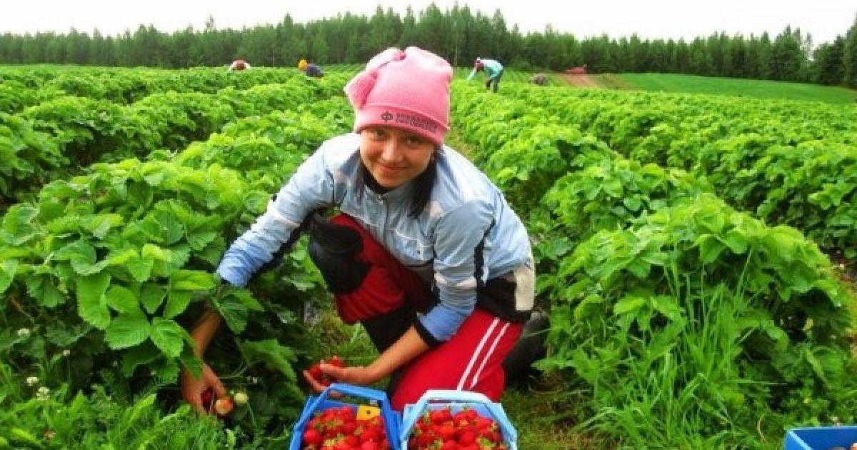 Сезонные работы: что предлагают этим летом украинцам