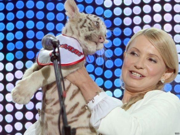Тимошенко та тигрюля