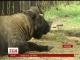 Малюка такінів нарешті змогли побачити відвідувачі Миколаївського зоопарку
