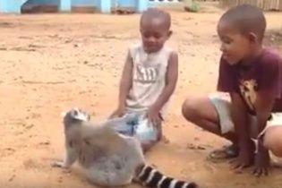Юзерів зворушило відео лемура, який просить дітей почухати собі спинку