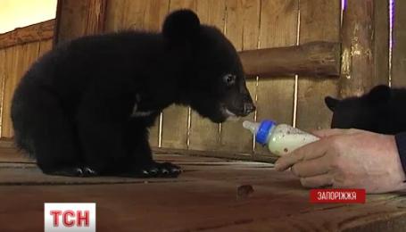 """На свет появились несколько маленьких жителей зоопарка """"Сафари"""" в Бердянске"""