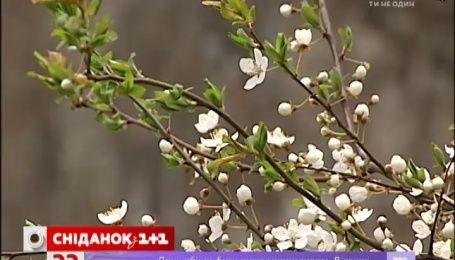 На выходных в Украине будет прохладно и сухо