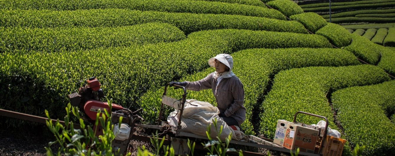 В Японії фермерів замінять роботами за $ 36 млн.