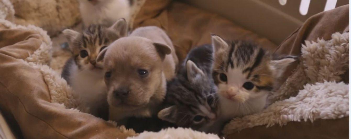 Турботлива кішка вигодувала цуценятко-сироту, мама якого загинула в аварії