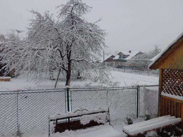 Карпати засипає снігом