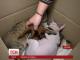 У Полтаві кішка стала мамою відразу трьох осиротілих білченят