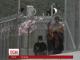 Сутички із поліцією спалахнули у таборі для переселенців на острові Лесбос