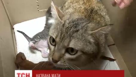 В Полтаве кошка приняла в свою семью троих осиротевших бельчат