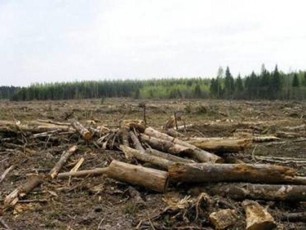 """На Закарпатті словацькі підприємці за """"допомогою"""" українських прикордонників масово вирубували ліс"""