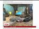 На очах у відвідувачів зоопарку тигрів нагодували зеброю