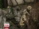 В Одесі у дворі однієї із творчих майстерень занепадають унікальні скульптури